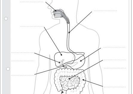 El aparato digestivo de pipoclub.com (Ciencias Naturales