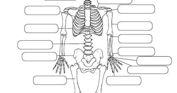 Human Anatomy Worksheet designed by Lucid Publishing