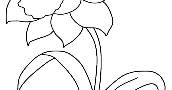 Print coloring page and book, Daffodil Flowers Coloring