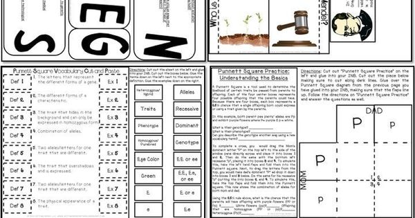 Over 20 Science Interactive Notebook activities covering