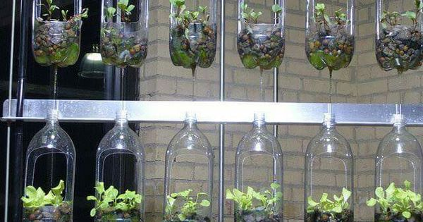 2 liter bottle upcycled planters  Home Outside