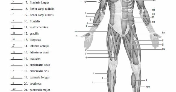 Wiring Diagram: 33 Blank Muscle Diagram To Label