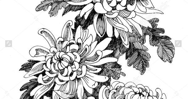 Hand drawing chrysanthemum flower vector illustration