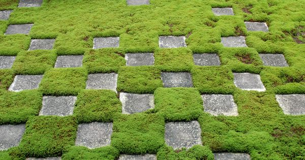 Glorious Ground Cover Ideas For Your Garden! Modern Patterns
