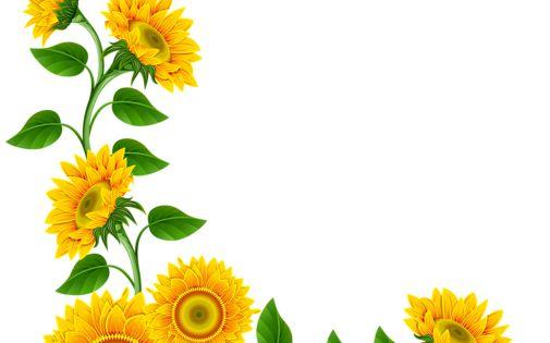 sunflower border decoration