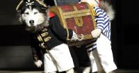 Best dog costume ever? Two pirates carrying a treasure ...