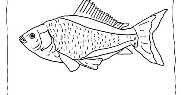 Goldfish Coloring Page Blank 8 Goldfish Picture to Color