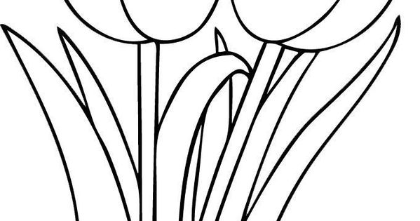 best-coloring-simple-tulip-outline-picture-hd-hd-coloring