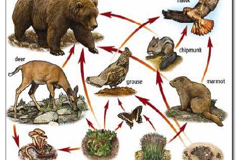 ocean ecosystem food chain diagram wiring adalah web | pinterest sun, game cards and the mushroom