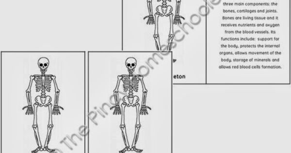 The Skeleton of the Human Body and Pumpkin Nomenclature