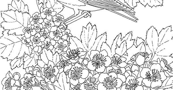 Missouri State Bird and Flower, Eastern Bluebird, Hawthorn