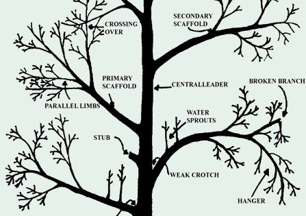 For you to follow a few specific fruit tree pruning