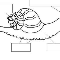 Slug Anatomy Diagram Isuzu Truck Radio Wiring Water Snail Www Toyskids Co With Labelling Google Search First Grade Clam Above
