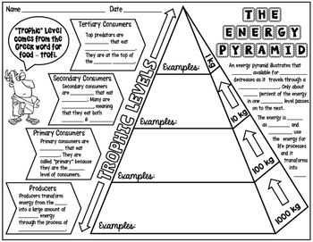 Energy pyramid science doodle notes, interactive notebook