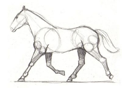 Drawing lesson for Beginner artists: The proportions of a