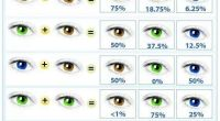 genetic eye color predictor chart, helps if working with ...
