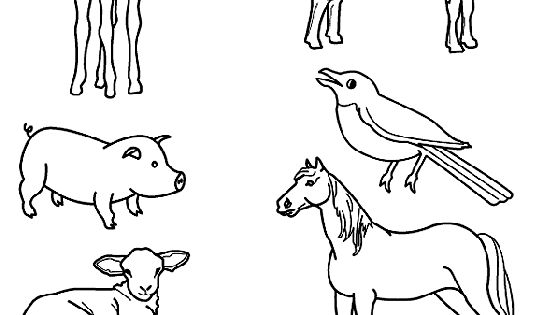 Match the baby animals to their parents by drawing lines