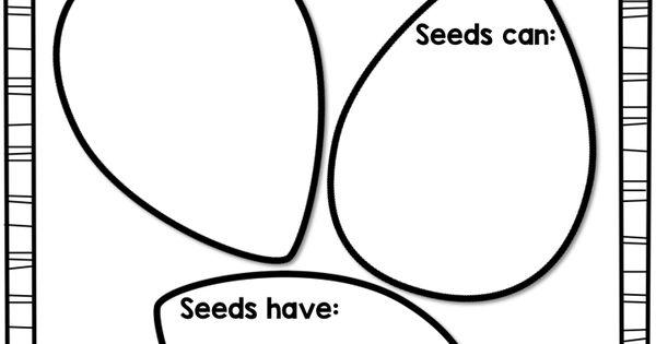 Color Me Kinder: FREE Seeds Graphic Organizer