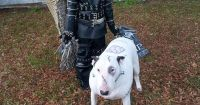 Cool Last-Minute Edward Scissorhands Boy Costume and ...