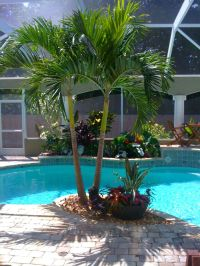 Best 25+ Tropical pool landscaping ideas on Pinterest
