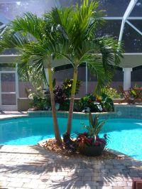 Tropical Poolside landscape plantings | Tropical Poolside ...