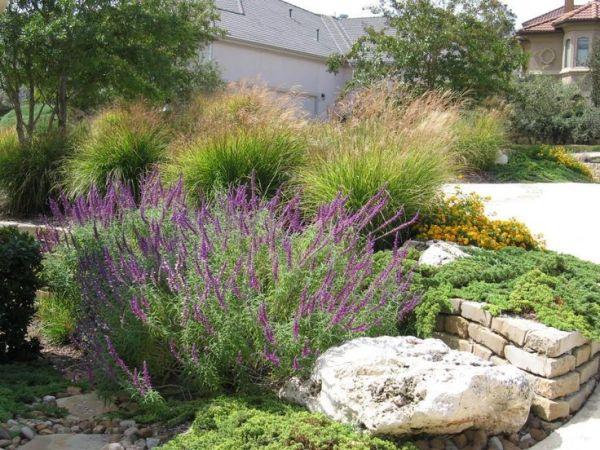 ideas texas landscaping