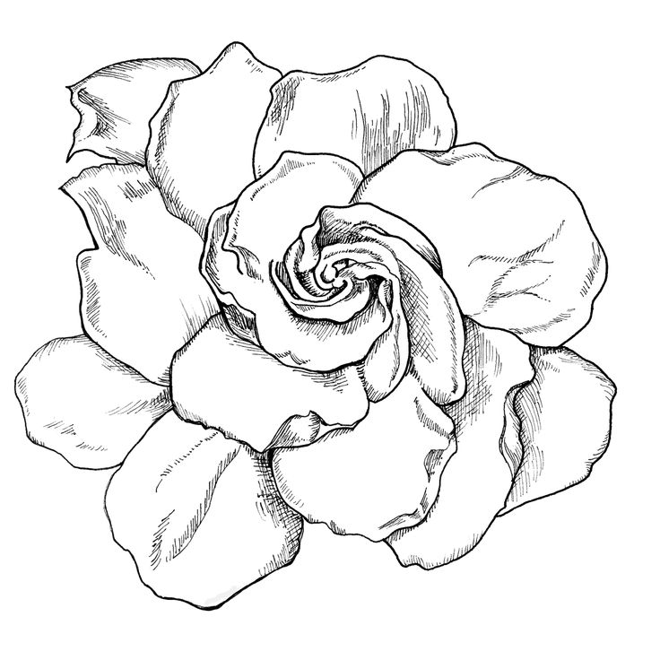 Gardenia Flower Tattoo Sketches Sketch Coloring Page
