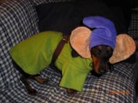 Cute dog costume! | DOPEY!!! Disney | Pinterest | My mom ...