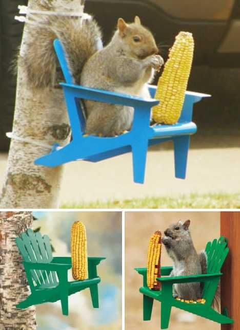 Nuts To Them 8 Brilliant Backyard Squirrel Feeders  Page