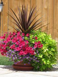 25+ best Outdoor Flower Pots trending ideas on Pinterest ...