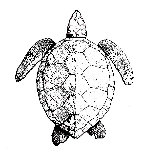 1000+ ideas about Sea Turtle Painting on Pinterest