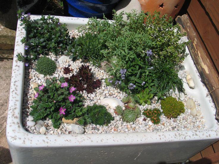 The 10 Best Images About Belfast Sink Alpine Garden Ideas On