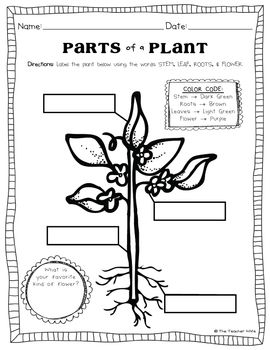 63 best images about Seed/Plant Lesson Plans on Pinterest