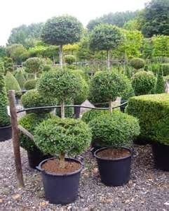 Topiaries specialty plants by splash2o 13 Other ideas