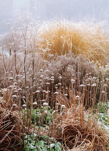 17 Best Ideas About Winter Garden On Pinterest Winter Vegetable
