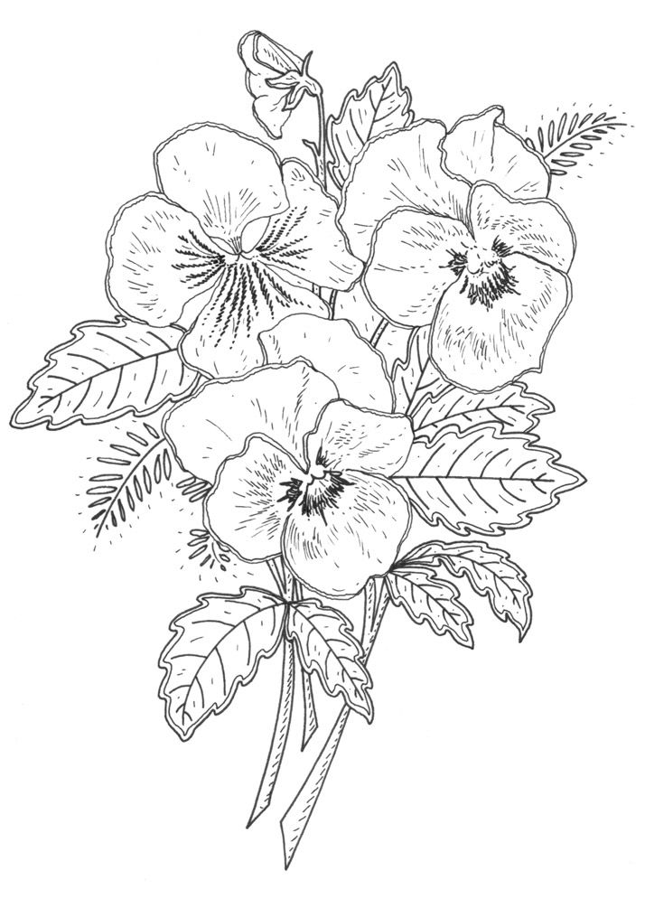 New Pansy Rubber Stamp Designs for Penny Black, CA
