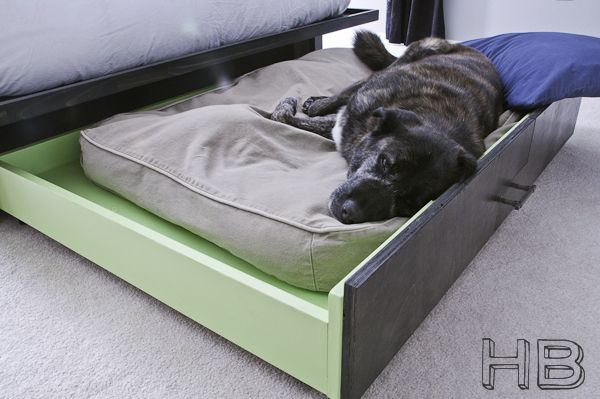 Trundle Dog Bed Animals Pinterest Sleep Diy
