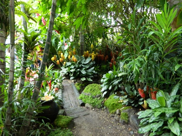 309 Best Images About Tropical Garden Ideas On Pinterest Gardens