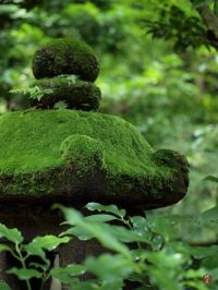 Awesome and Creative Photos with Moss (15 Pictures ...