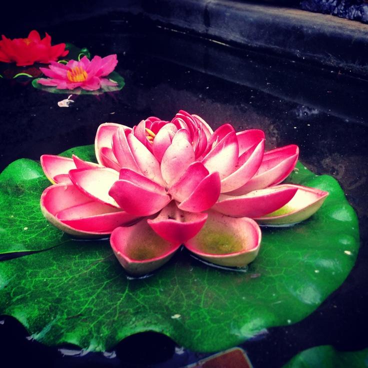 124 Best Images About Plantas Acuáticas On Pinterest