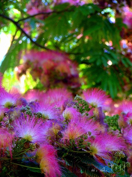 39 best images about ღ TreeMimosa ღ on Pinterest