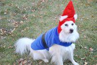 american eskimo dog costume - Google Search | Eskie-pades ...