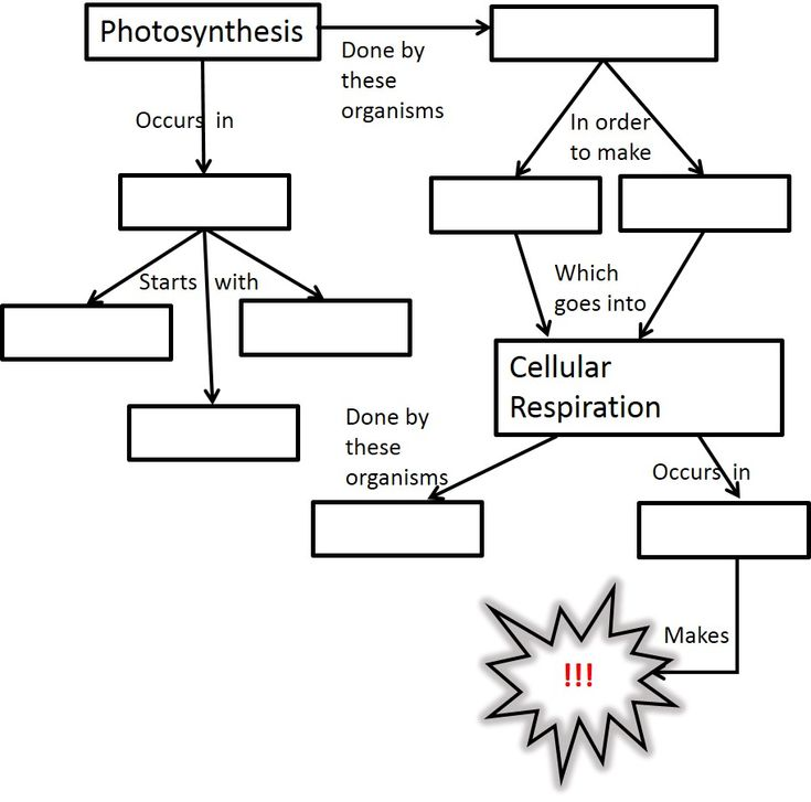 65 best images about Cellular Respiration on Pinterest