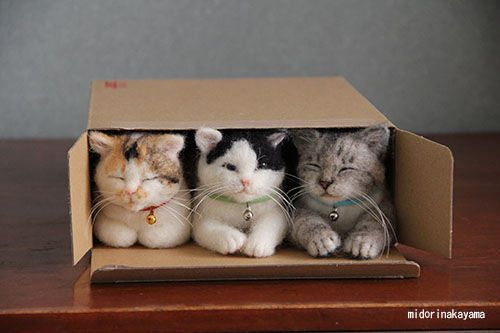Three little cats lost their flats, and had to move in as one. They found that their flat was small for three cats, and one