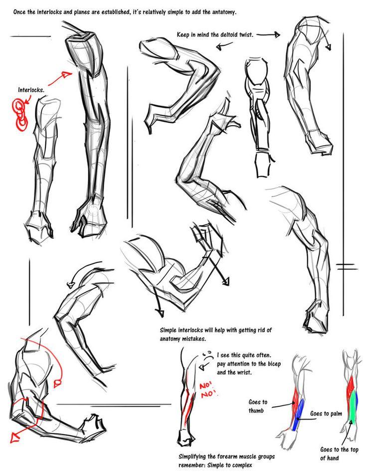17 Best images about Anatomy: Shoulder & Arm on Pinterest