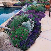 flowers around a patio border | Potted plants | Pinterest ...