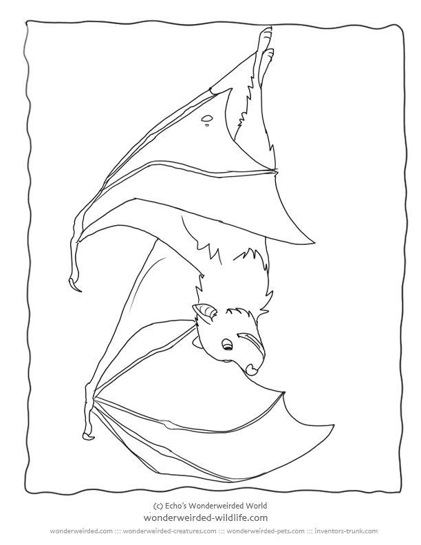 25+ best ideas about Bat coloring pages on Pinterest