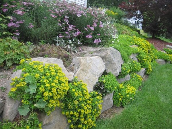 drought resistant ground cover