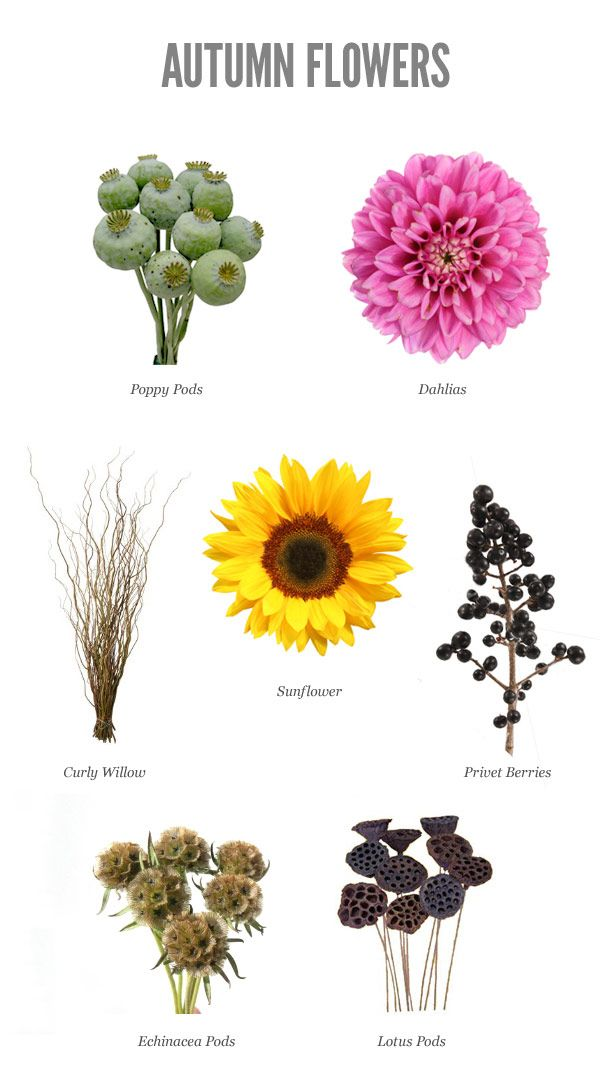 17 best ideas about September Flowers on Pinterest  September wedding flowers September