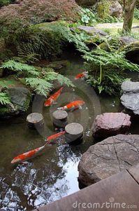 Zen Koi Ponds Nursery | The pond of a japanese zen garden ...